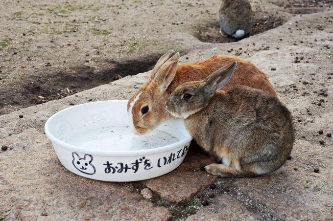 ウサギの島「大久野島」