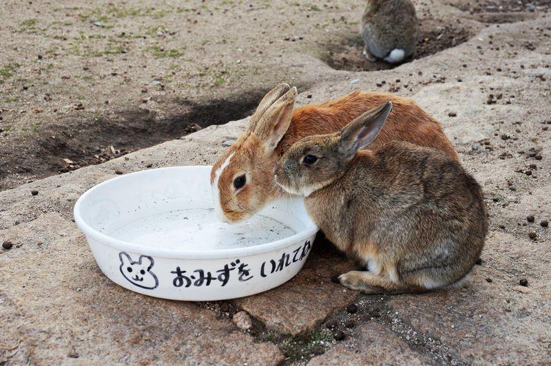 世界中から観光客が訪れるウサギの島「大久野島」