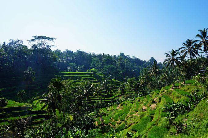 5.インドネシア「バリのアートフェスティバル」