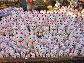 猫好き必見!招き猫がいっぱいの東京・豪徳寺