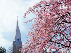 春を満喫!新宿御苑の桜・梅と京王プラザホテルのつるし雛