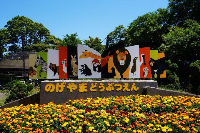 年間100万人が訪れる人気動物園「野毛山動物園」