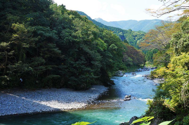 東京の癒しスポット!奥多摩でラフティングやわさびツアー