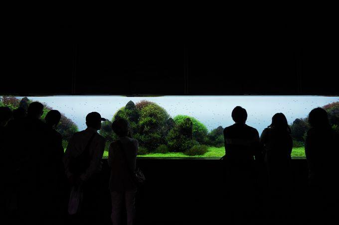 ここは美術館?まるで絵画のような熱帯魚コーナー