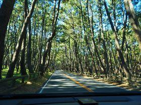 佐賀県唐津で松林のトンネルや棚田を満喫!呼子のイカも忘れずに