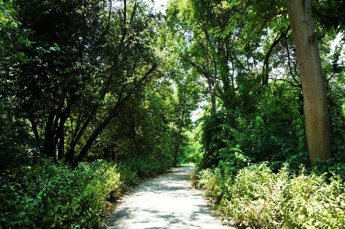 緑に囲まれた憩いの場所「国立公園」