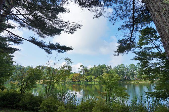 遊歩道の散策がおすすめ!ぐるっと周遊できる蓼科湖