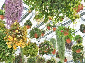 東京の新感覚フラワーパーク「HANA・BIYORI」花とデジタルのアートも