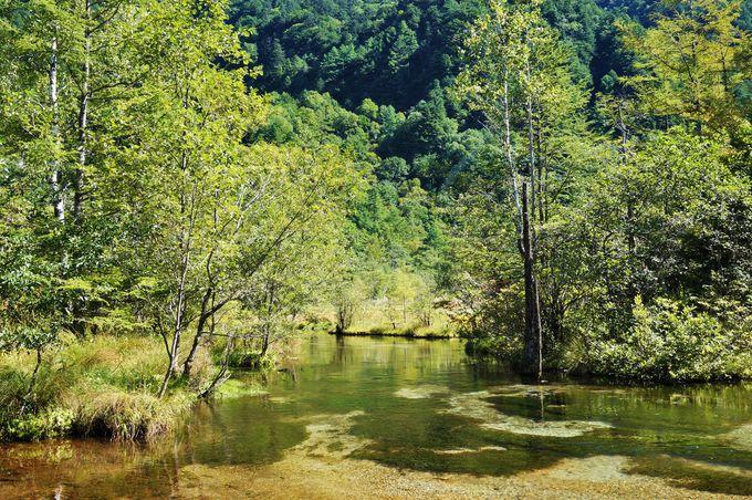 展望ポイントの田代湿原と真っ赤な田代池