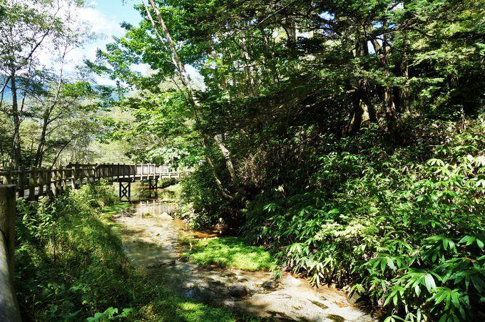 圧巻の美しさ!エメラルドグリーンが印象的な大正池