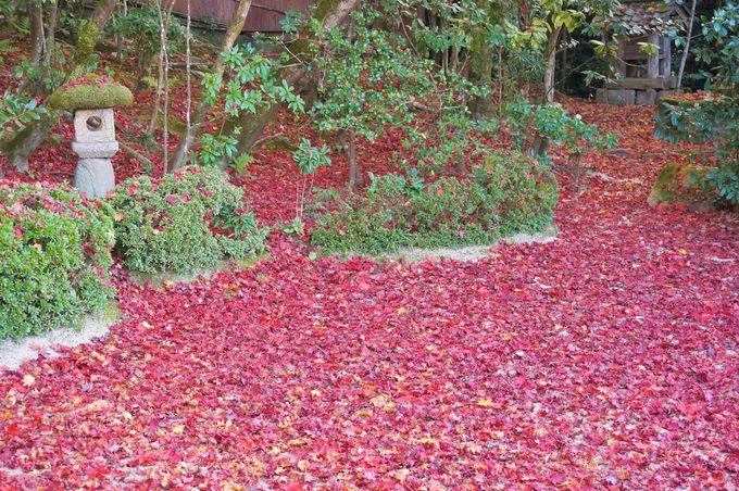 枝に翼が生えている!?「詩仙堂」の日本庭園にある珍植物
