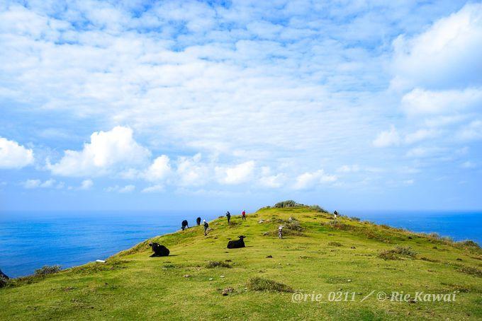 切り立つ崖が続く絶景を堪能しながら、のんびりハイキング