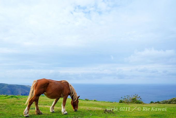 西ノ島一の絶景スポット「摩天崖」