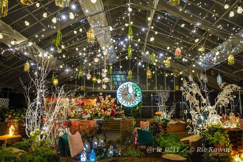夜の箱根観光におすすめ!箱根強羅公園「スプリングナイトガーデン」