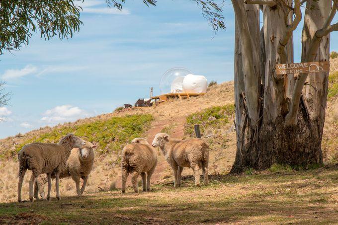 オーストラリア初上陸のバブルテント・オーストラリア