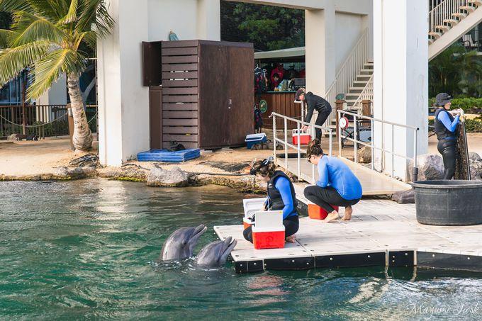 イルカが泳ぐプライベート・ラグーン
