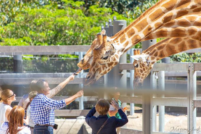 キリン、象、ゴリラなど「動物園の定番」