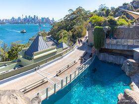 シドニー・ハーバーの絶景を見渡す「タロンガ動物園」