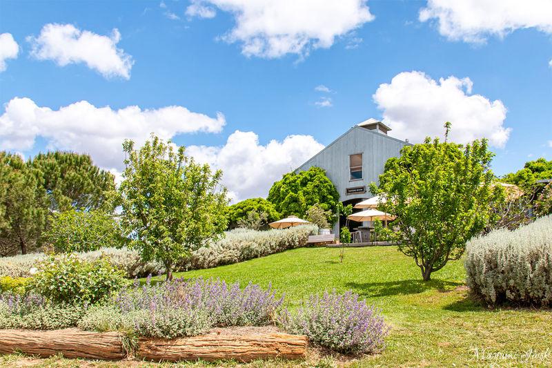 シドニー近郊のワインの街「マッジー」のおすすめワイナリー4選