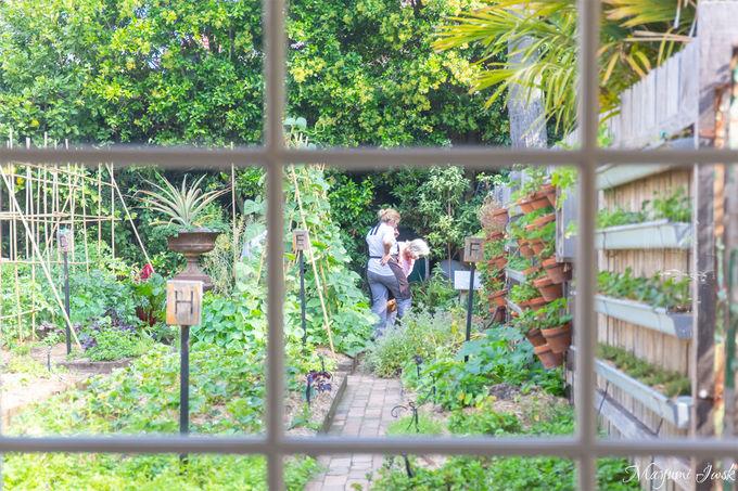 自家製野菜を育てるハーブガーデン