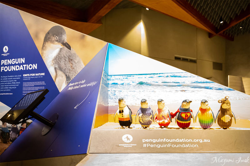 フィリップ島のペンギンパレード