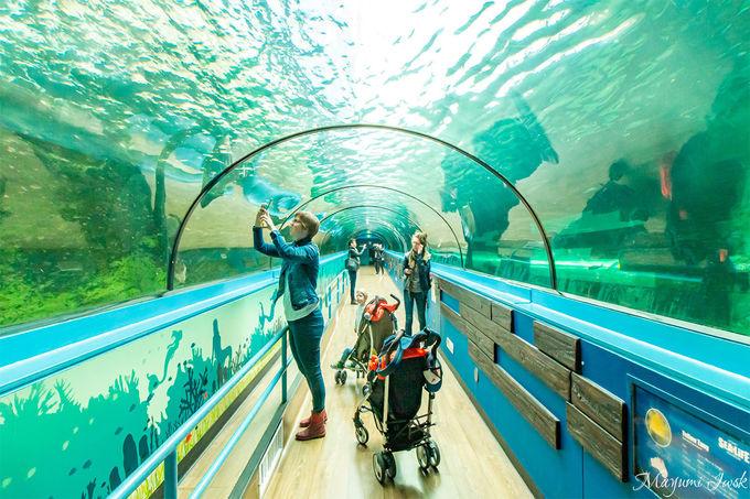 【5】シドニー水族館(SEA LIFE Sydney Aquarium)