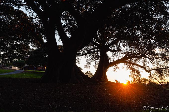 天文台脇の絶景公園「オブザーバトリー・ヒル・パーク」