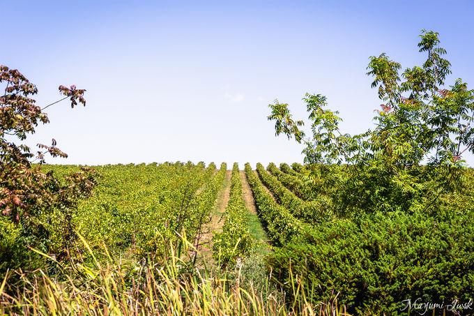 南オーストラリアのワインの銘醸地「アデレード・ヒルズ」