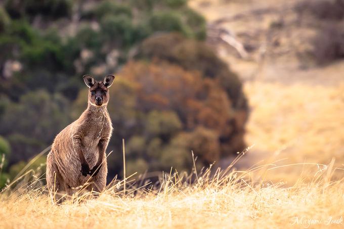 4. 柵のない動物園で野生動物に出会う