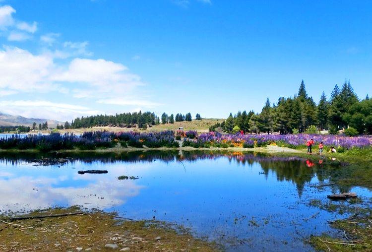 3.ターコイズブルーに輝く「テカポ湖」