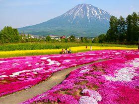 美しすぎる!北海道の絶景スポット「三島さんの芝ざくら庭園」