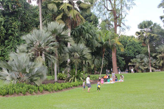 ピクニックが楽しめる、シンガポール植物園