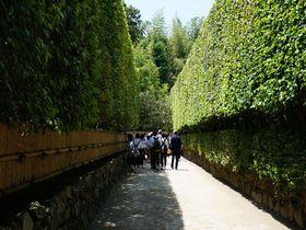 「銀閣寺」を楽しむ5つのポイント!足利義政が追求した日本の美