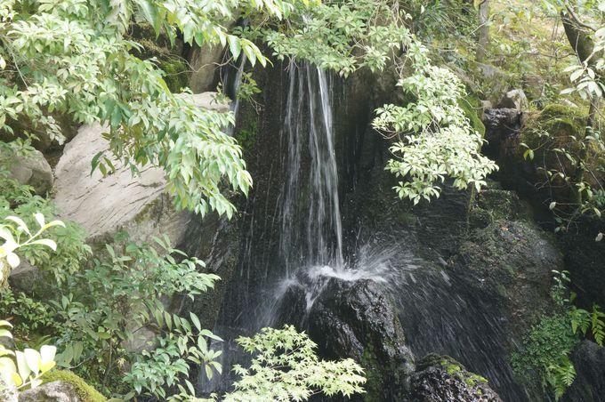 ポイント5 鯉は滝を上り切って龍になる。