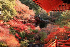 京都の人気紅葉スポットを効率よく巡る1泊2日モデルコース