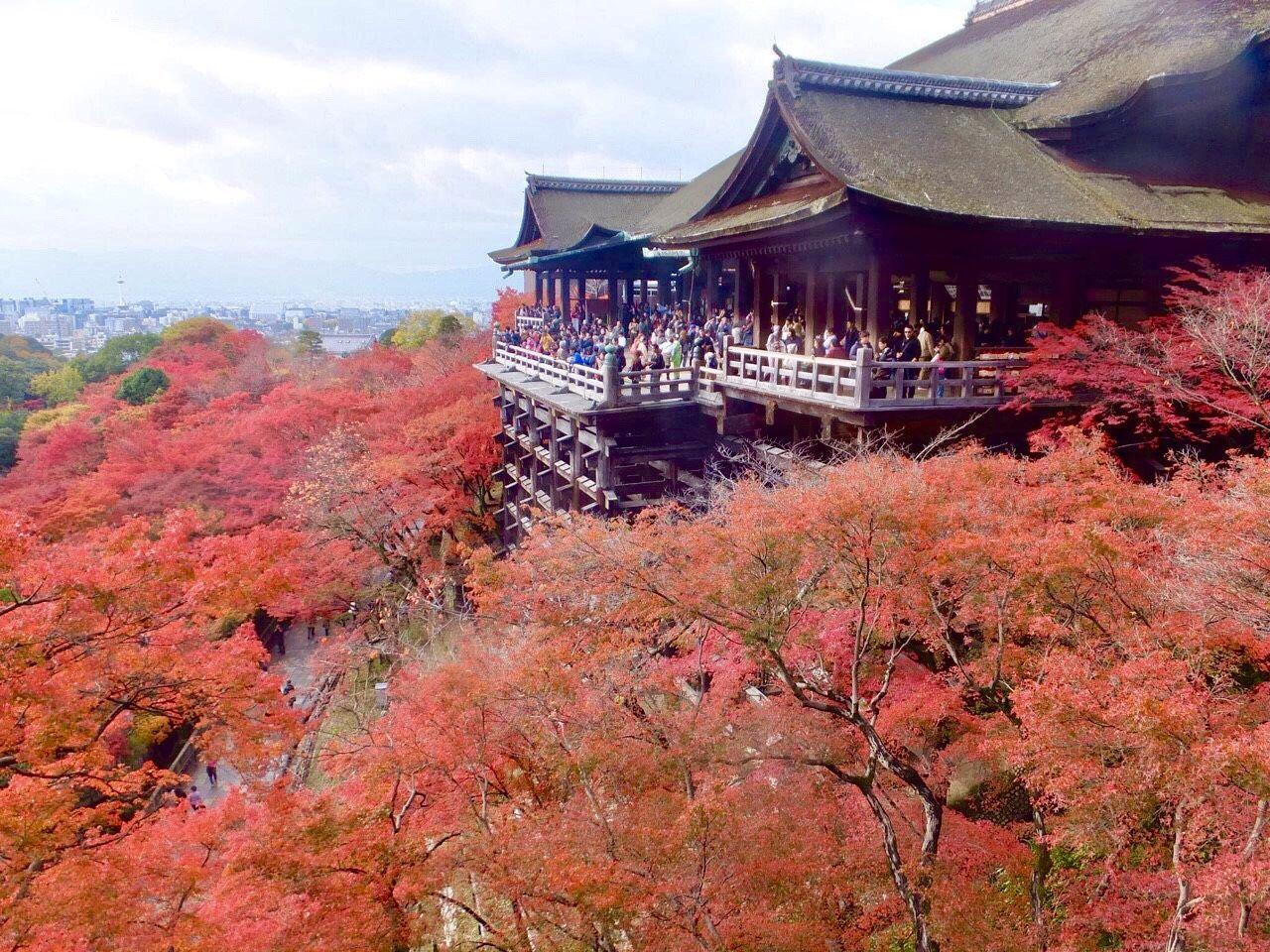 2日目AM:早朝の清水寺と絶対外せない東福寺へ!