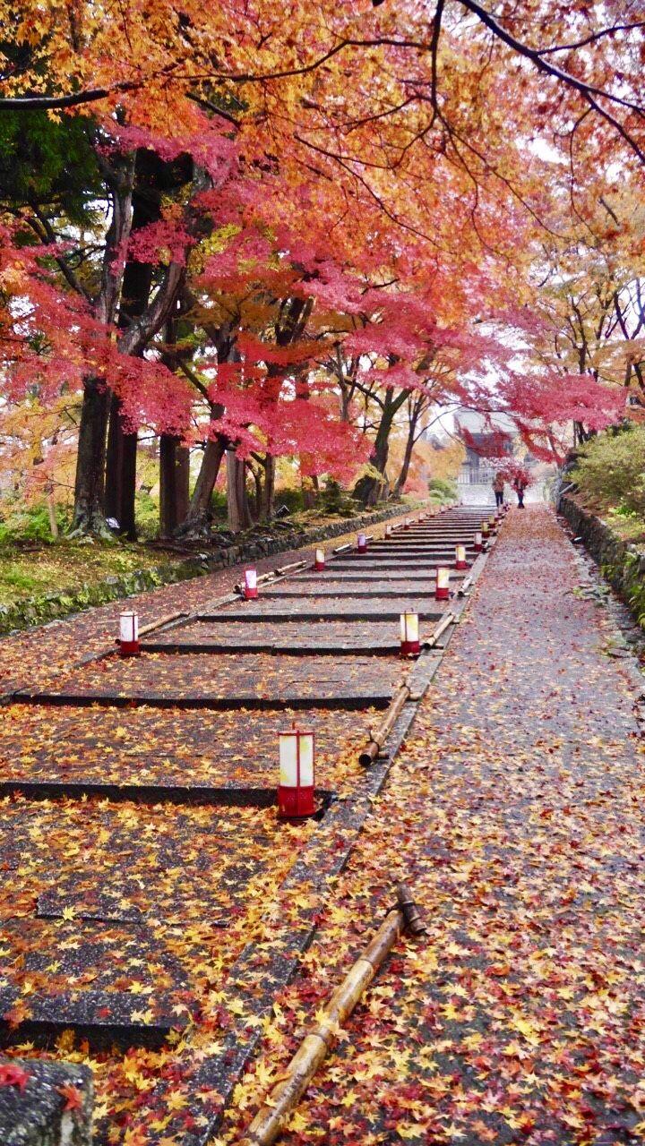 1日目AM:散り紅葉の名所!毘沙門堂へ