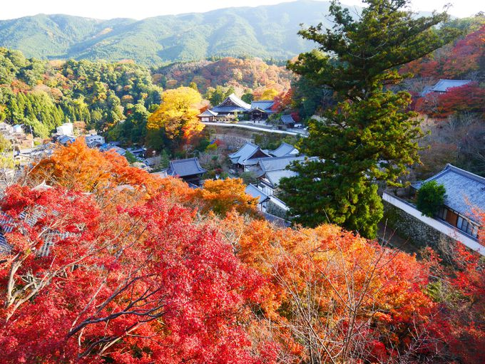 高台からの景色の絶景に感動!長谷寺の紅葉!