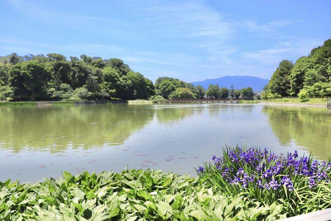 9時:日本の始まりの地、橿原神宮へ