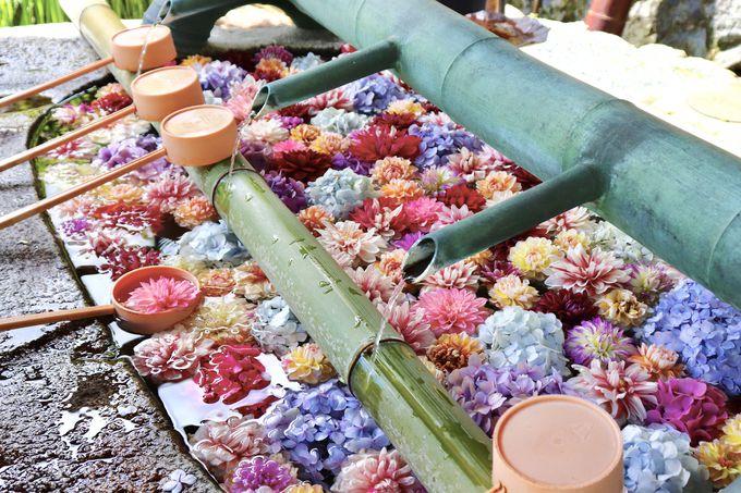 14時:美しい花を愛でる岡寺と橘寺へ