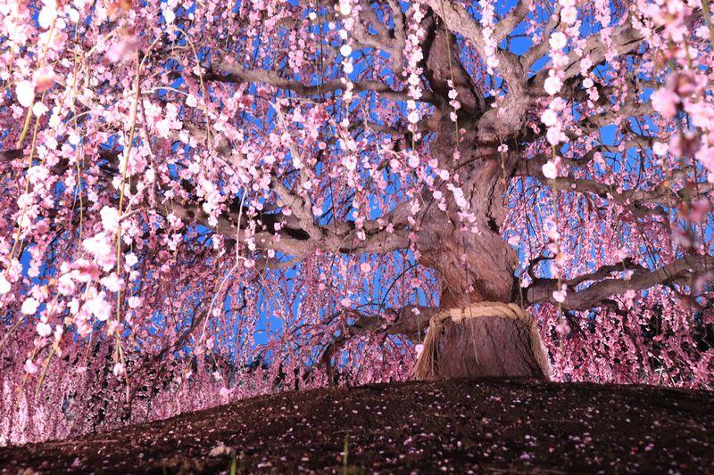 日本が誇る魅惑の庭園「鈴鹿の森庭園」失敗しない来園ポイントも!