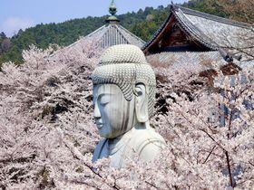 知ってる!?ここはおさえたい!奈良の隠れた桜の名所!
