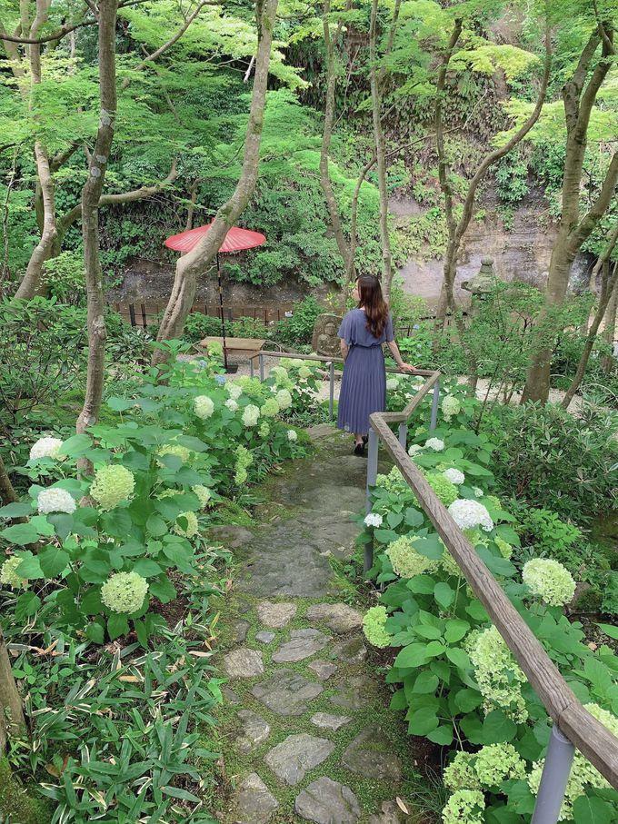 鎌倉ではめずらしい川と共に愛でる庭園!
