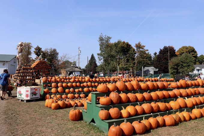 「The Great Pumpkin Farm」でカボチャを買おう!!