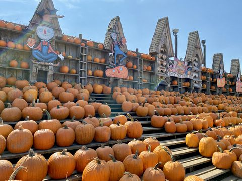 NY「The Great Pumpkin Farm」のパンプキン・パッチで秋を満喫!