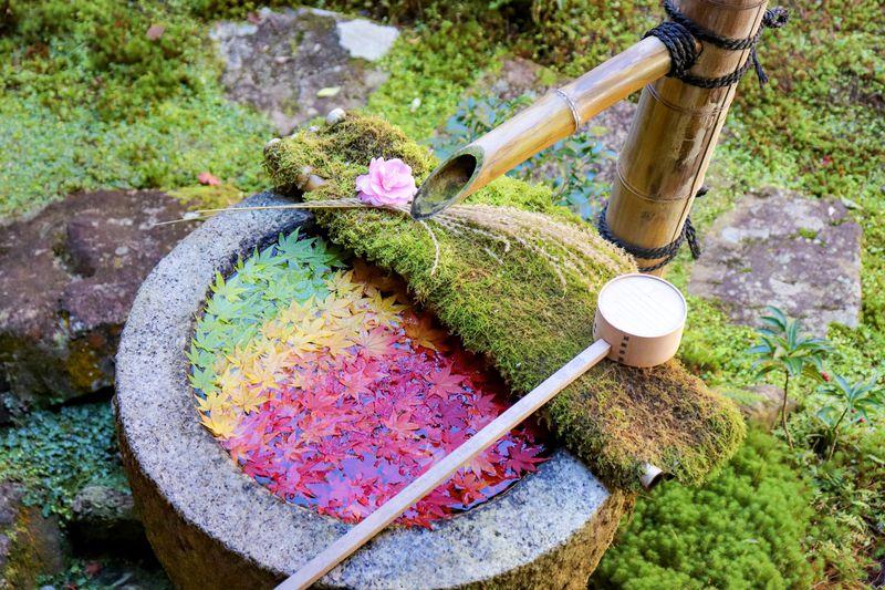 心で観じるお寺「柳谷観音 楊谷寺」を知らずして秋の京都は語れない!