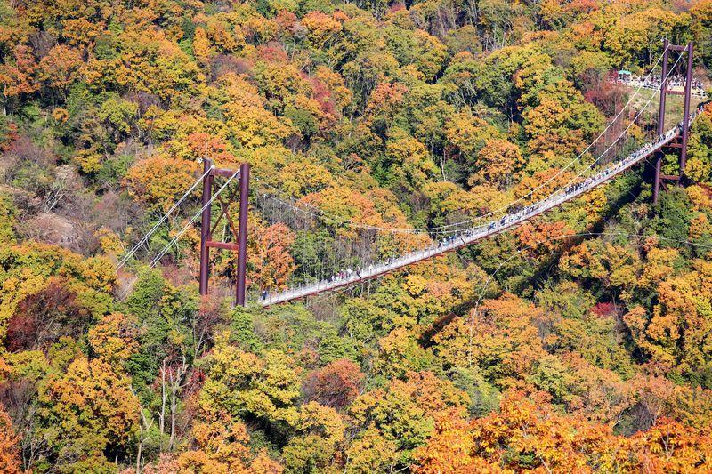 大阪の紅葉必見スポット!ほしだ園地「星のブランコ」で絶景体験