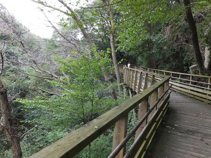 大阪府民の森ほしだ園地とは?