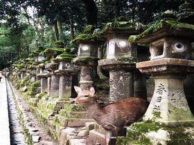 いにしえの南都満喫!大人の奈良修学旅行