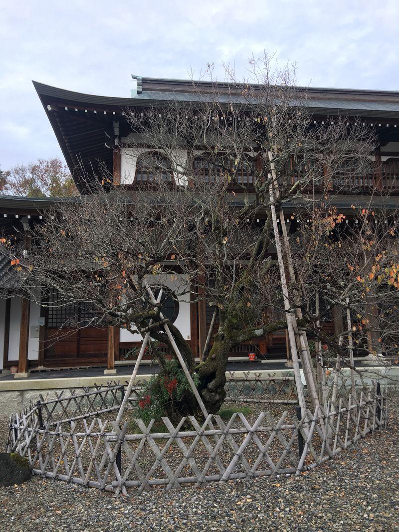 左近なくして三成は語れず!重臣左近屋敷跡に佇む清涼寺